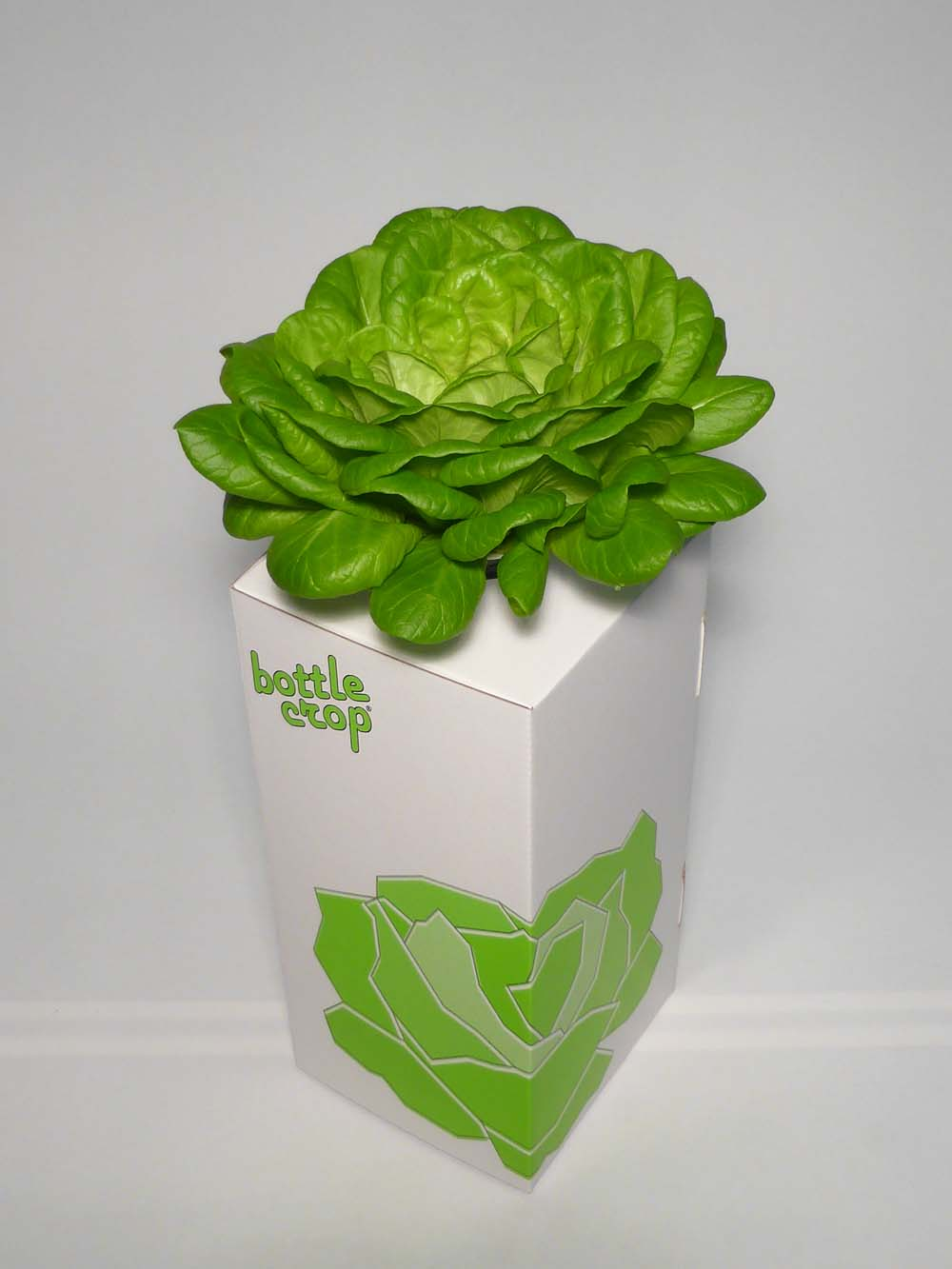 BottleCrop – Der Salat aus der Flasche