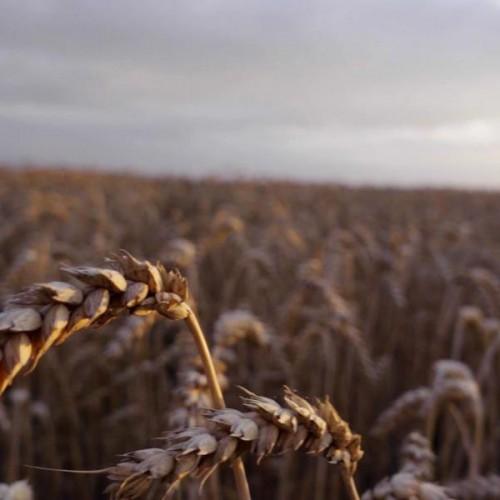 Imagefilm zur Saatgutbehandlung mit Elektronen